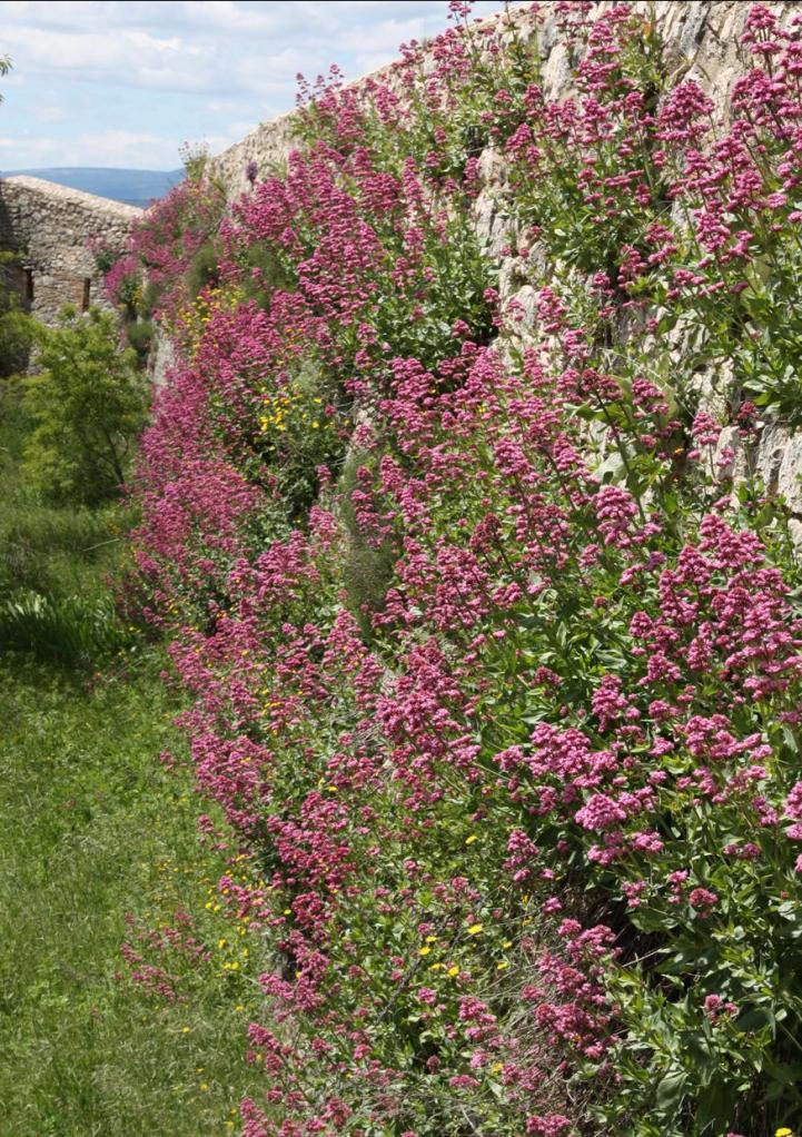 castillo 54 flores